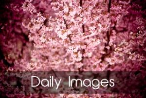Images du quotidien